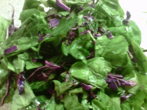 Salad greens spinach