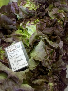 Fresh lettuce is perishable so plan your meals to use it up quick!