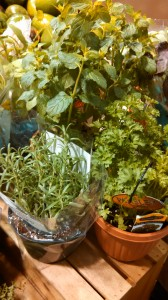 Live herbs at grocery store